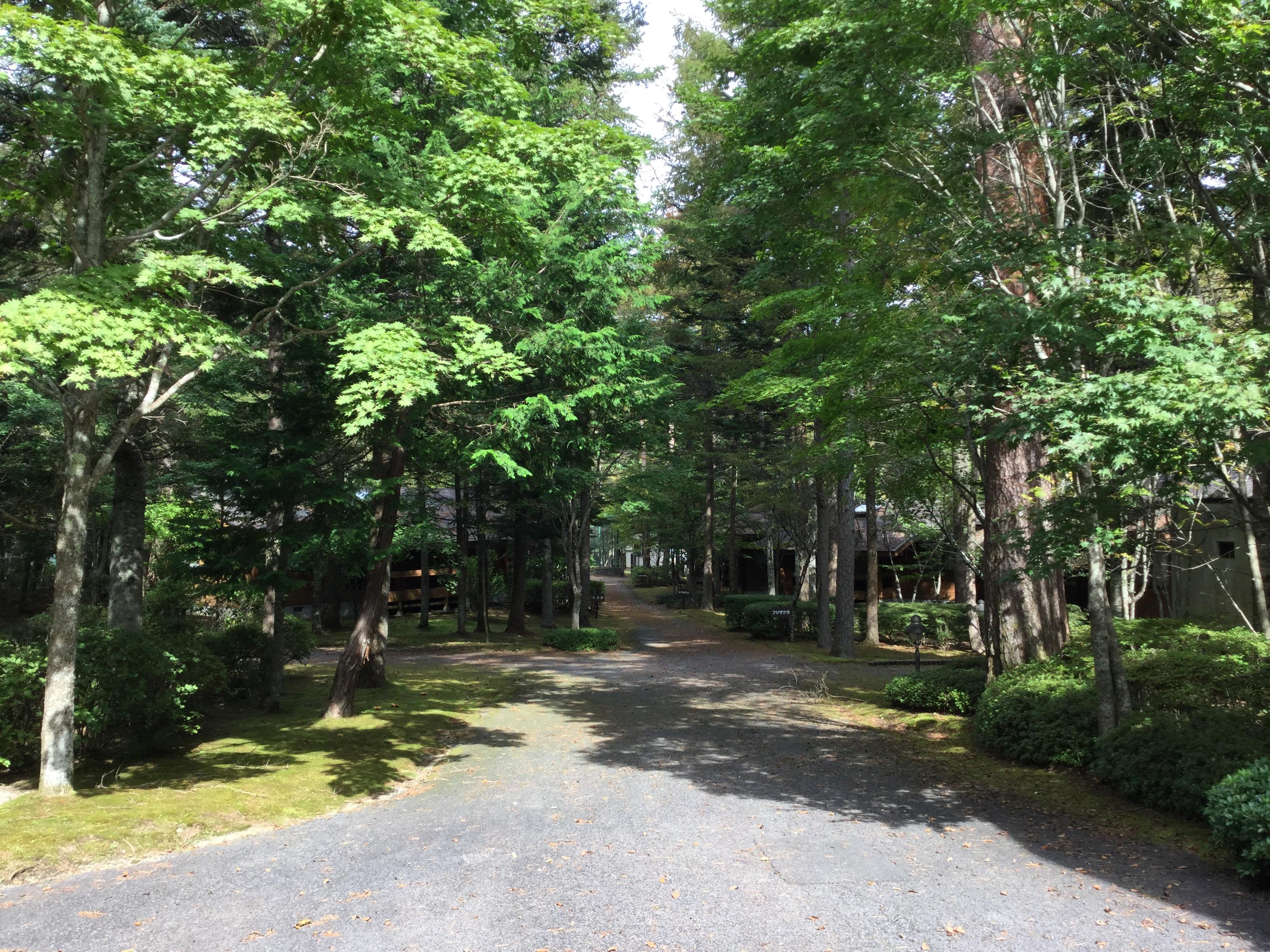 森林環境譲与税
